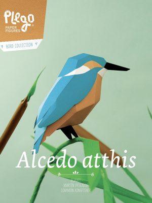 Alcedo Atthis