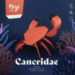 Cancridae